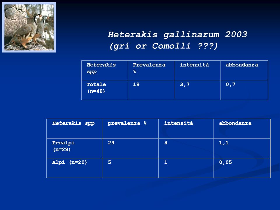 Heterakis gallinarum 2003 (gri or Comolli )