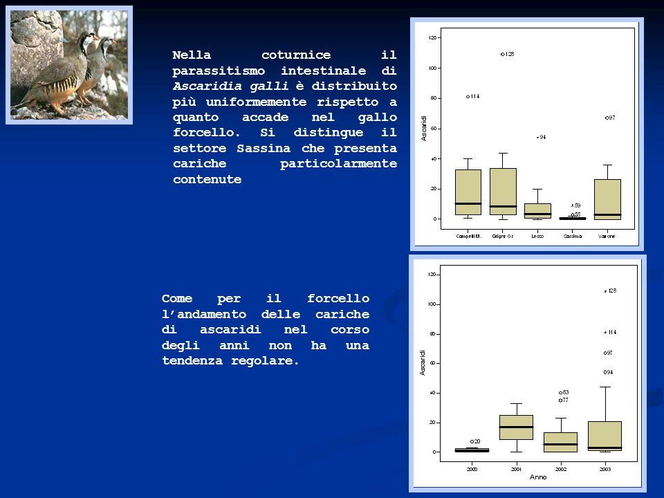 Nella coturnice il parassitismo intestinale di Ascaridia galli è distribuito più uniformemente rispetto a quanto accade nel gallo forcello. Si distingue il settore Sassina che presenta cariche particolarmente contenute