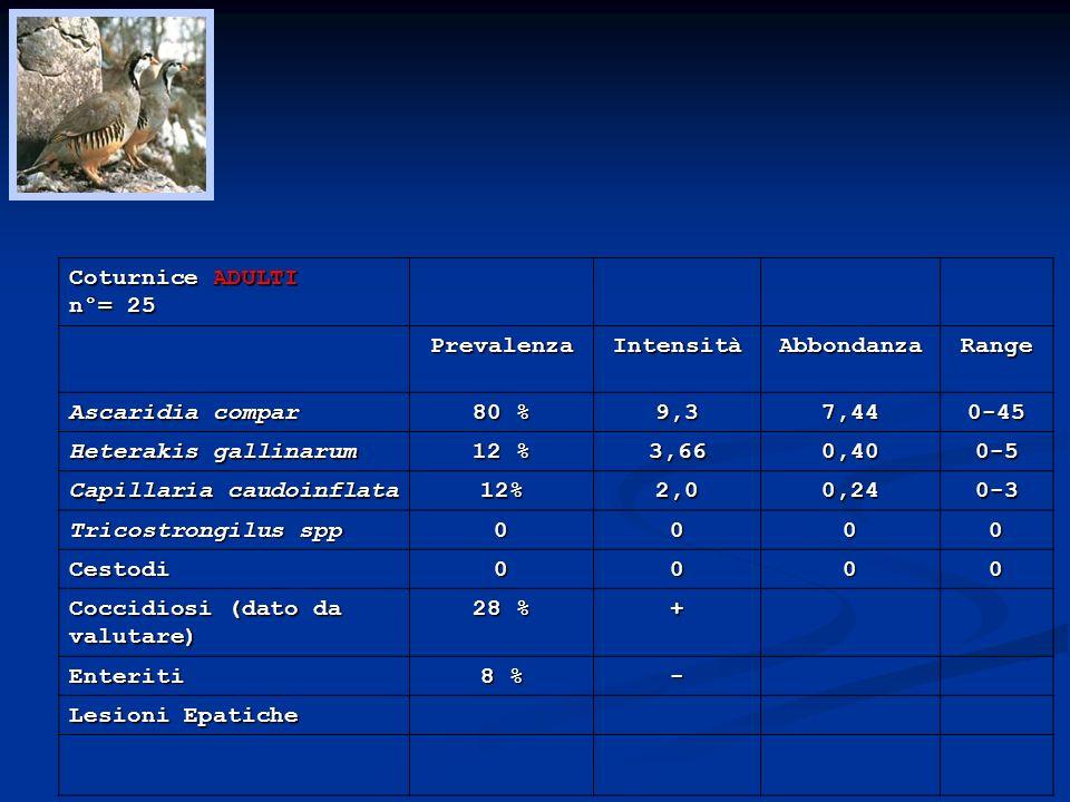 Coturnice ADULTI n°= 25. Prevalenza. Intensità. Abbondanza. Range. Ascaridia compar. 80 % 9,3.