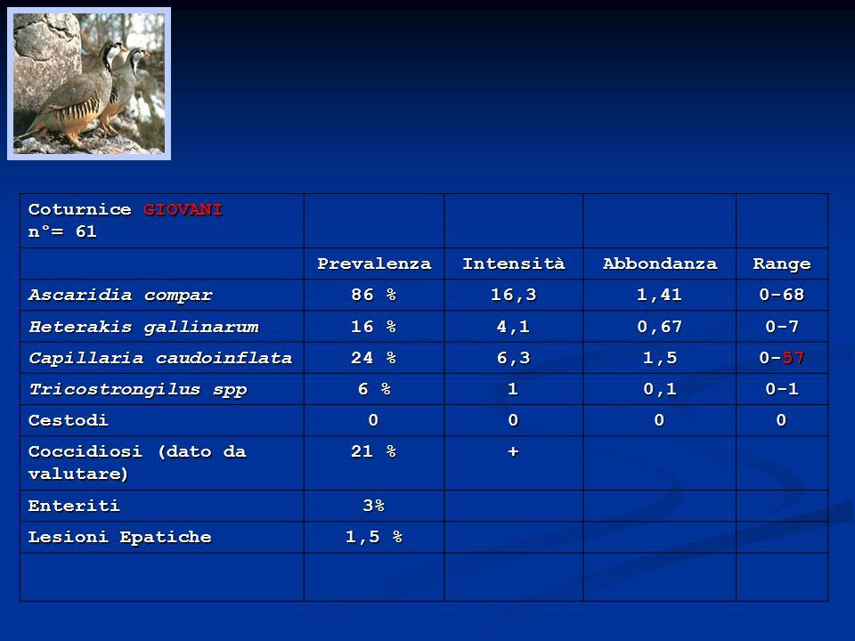 Coturnice GIOVANI n°= 61. Prevalenza. Intensità. Abbondanza. Range. Ascaridia compar. 86 % 16,3.