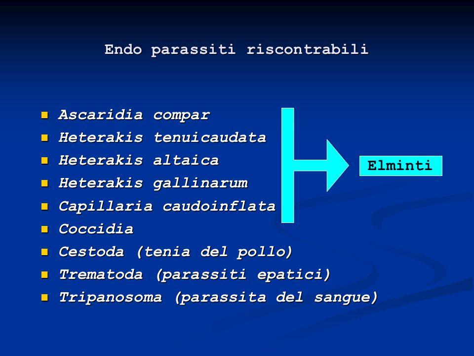 Endo parassiti riscontrabili