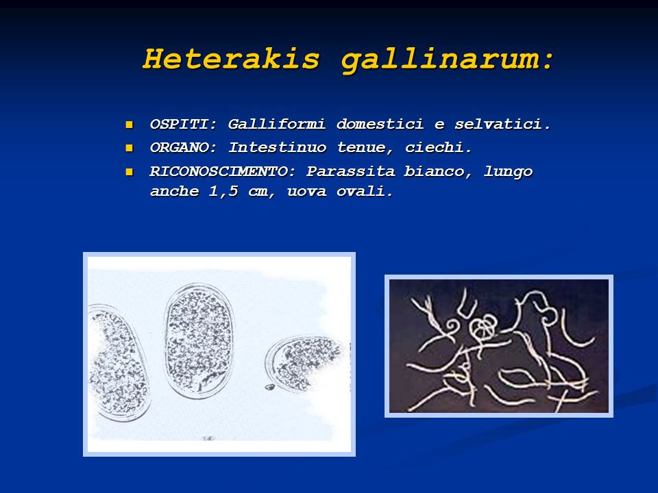 Heterakis gallinarum: