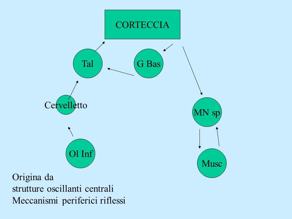 CORTECCIA Tal. G Bas. Cervelletto. MN sp. Ol Inf. Musc. Origina da strutture oscillanti centrali.