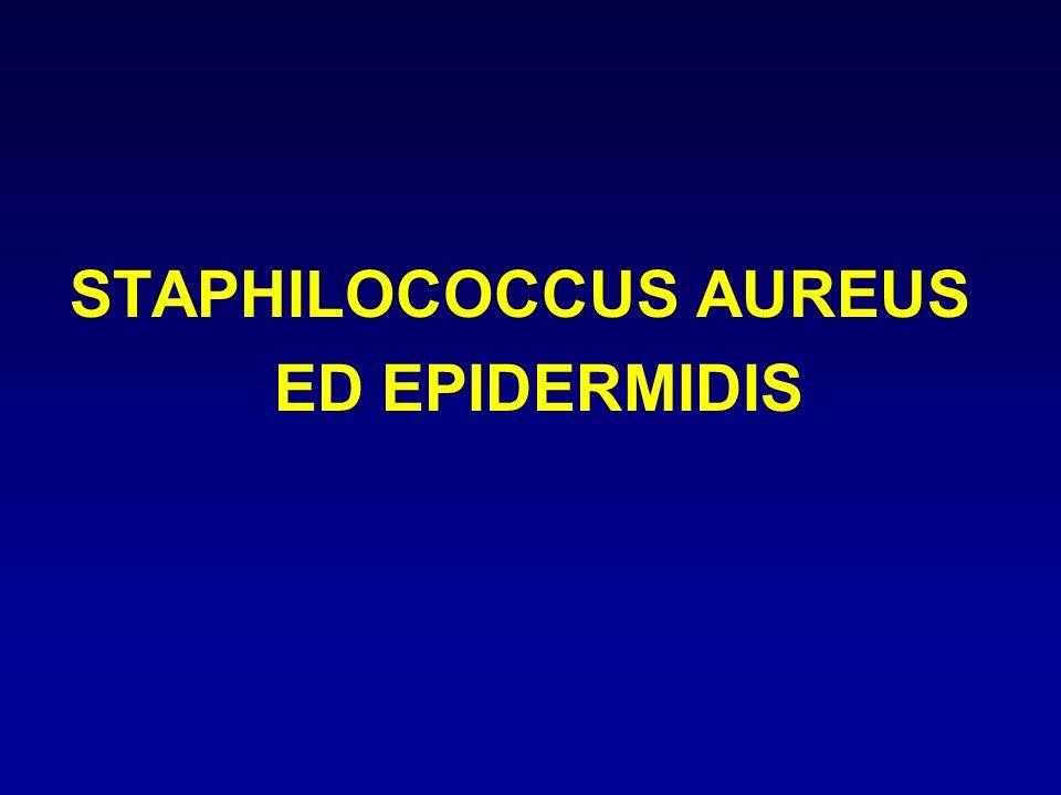 STAPHILOCOCCUS AUREUS