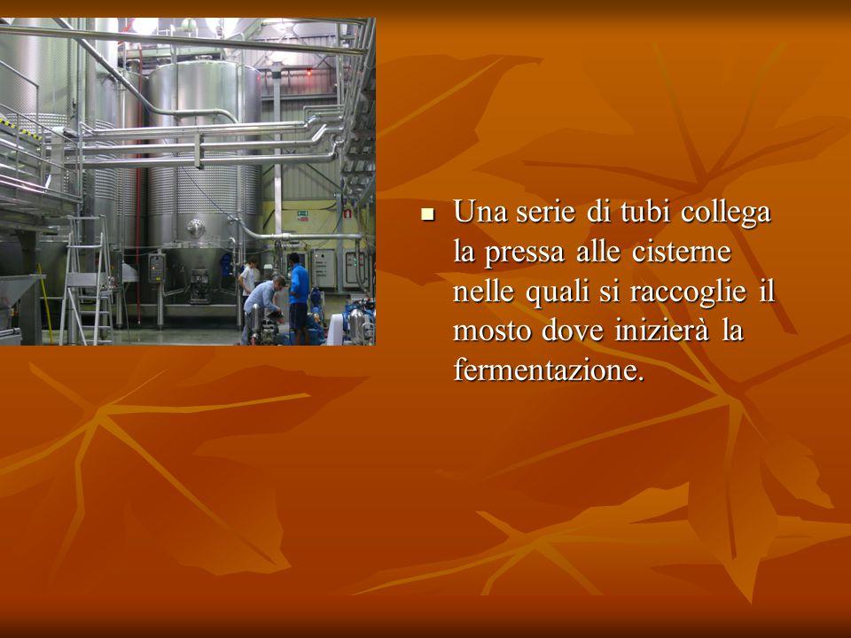 Una serie di tubi collega la pressa alle cisterne nelle quali si raccoglie il mosto dove inizierà la fermentazione.