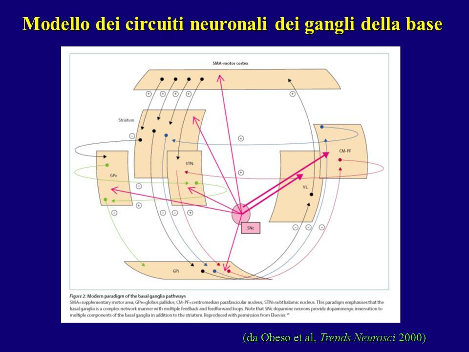 Modello dei circuiti neuronali dei gangli della base