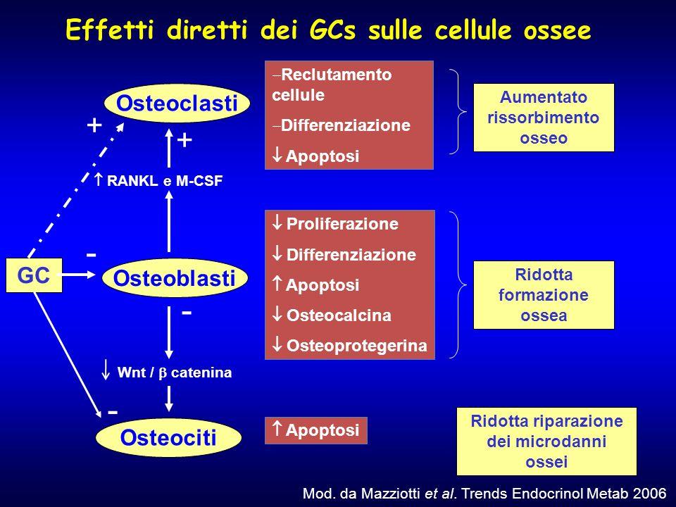 - - - + + Effetti diretti dei GCs sulle cellule ossee Osteoclasti GC