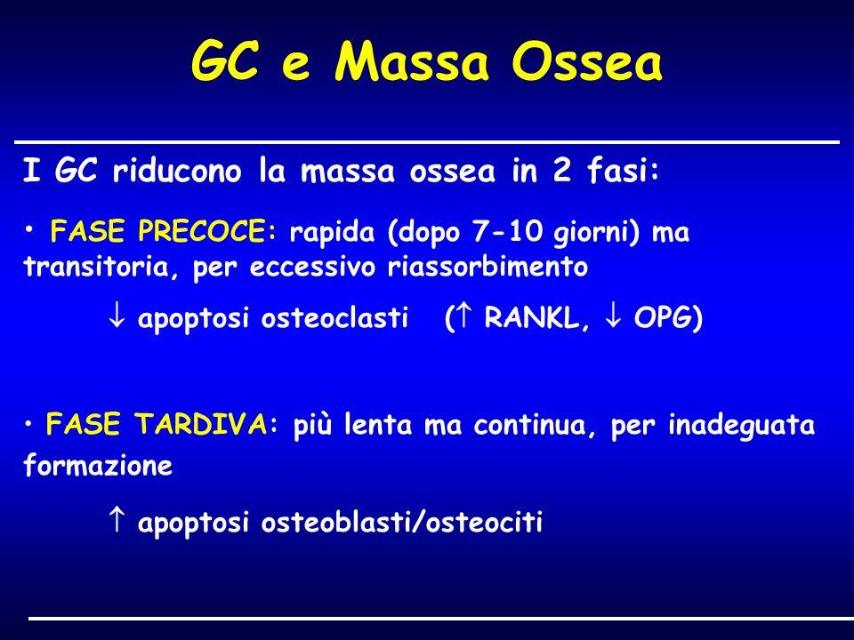 GC e Massa Ossea I GC riducono la massa ossea in 2 fasi: