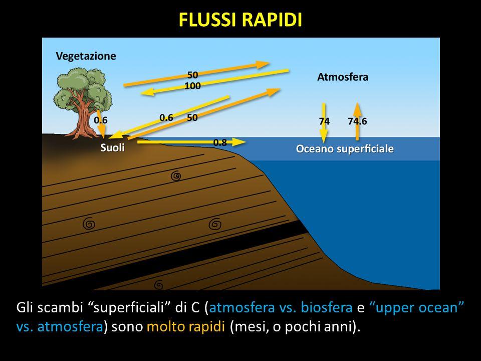 FLUSSI RAPIDI Gli scambi superficiali di C (atmosfera vs.