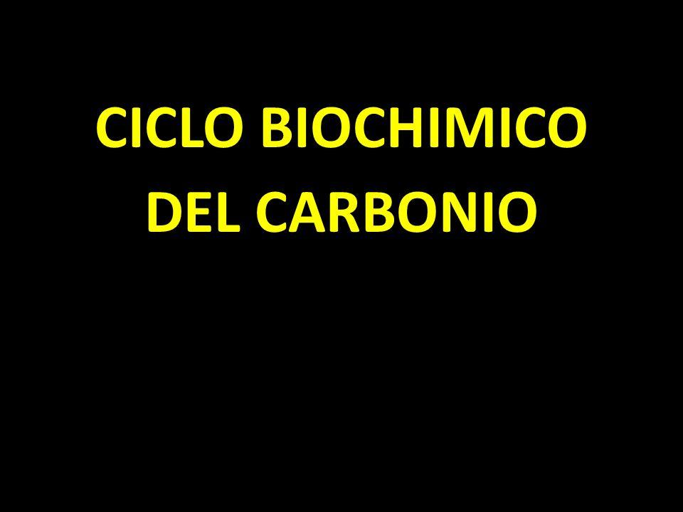 CICLO BIOCHIMICO DEL CARBONIO