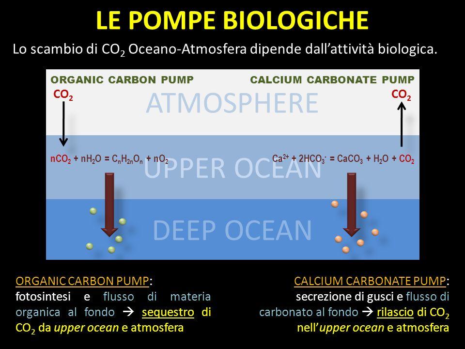 ATMOSPHERE UPPER OCEAN DEEP OCEAN LE POMPE BIOLOGICHE