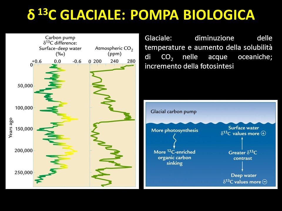 δ 13C GLACIALE: POMPA BIOLOGICA