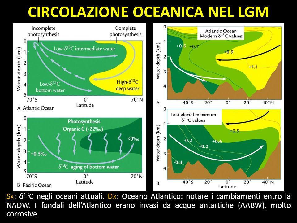 CIRCOLAZIONE OCEANICA NEL LGM