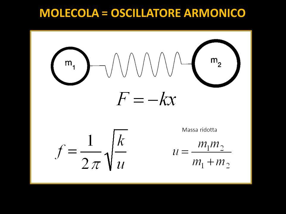 MOLECOLA = OSCILLATORE ARMONICO