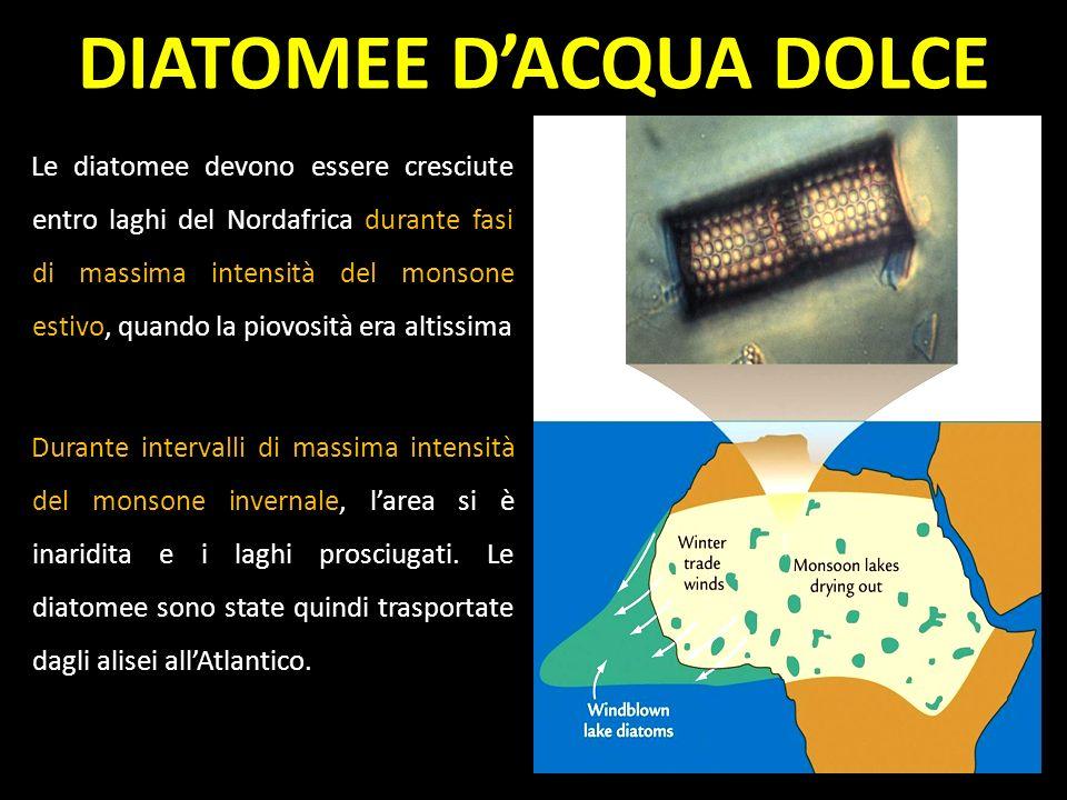 DIATOMEE D'ACQUA DOLCE