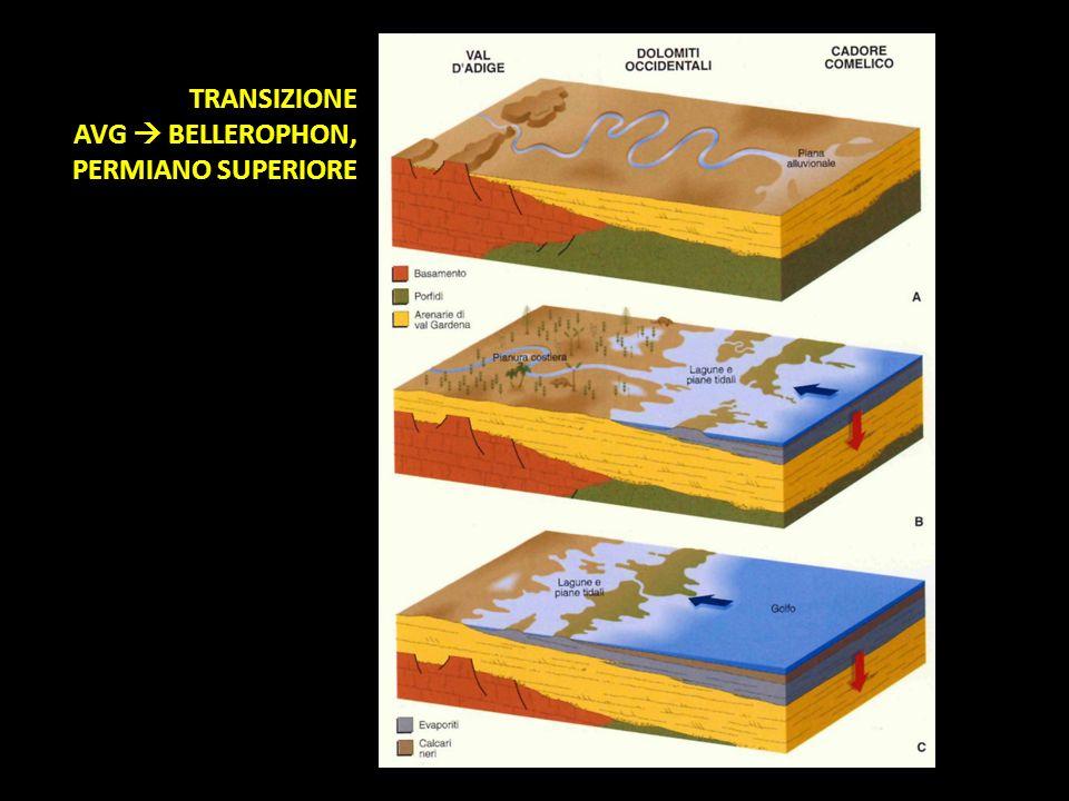 TRANSIZIONE AVG  BELLEROPHON, PERMIANO SUPERIORE