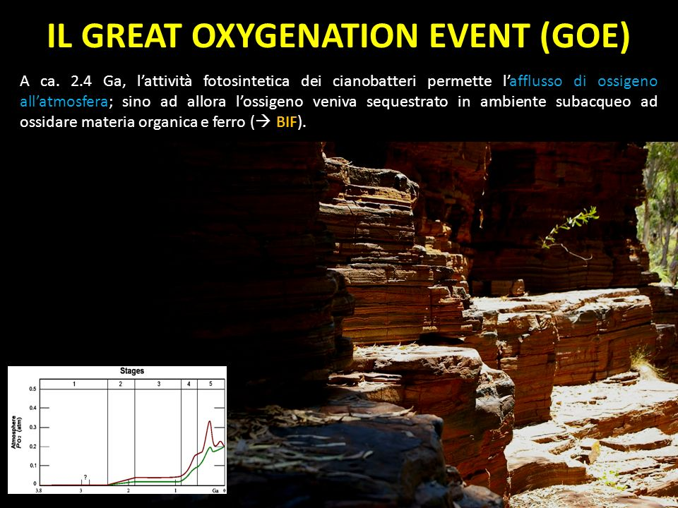 IL GREAT OXYGENATION EVENT (GOE)