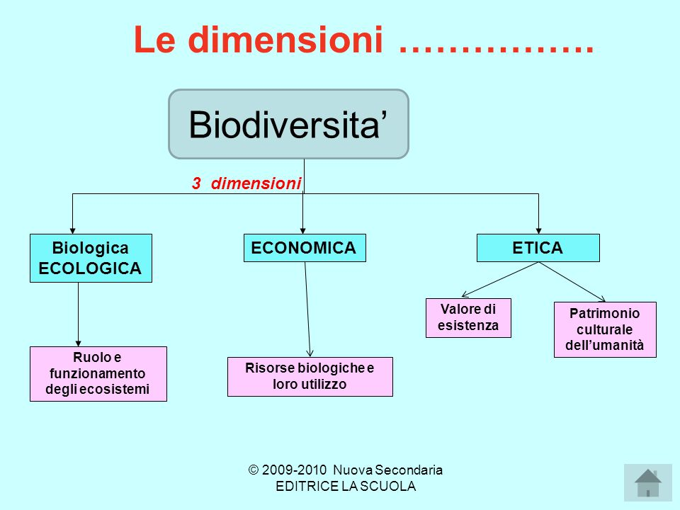 Le dimensioni ……………. Biodiversita' 3 dimensioni Biologica ECOLOGICA