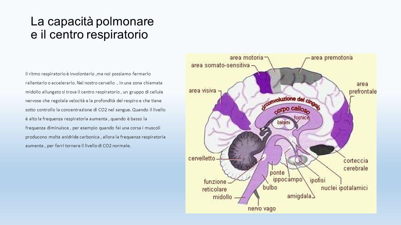 La capacità polmonare e il centro respiratorio