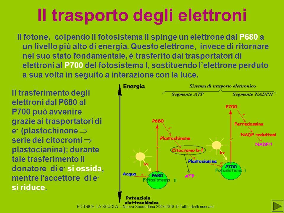 Il trasporto degli elettroni