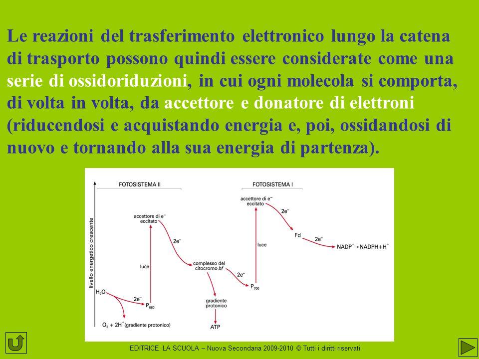 Le reazioni del trasferimento elettronico lungo la catena di trasporto possono quindi essere considerate come una serie di ossidoriduzioni, in cui ogni molecola si comporta, di volta in volta, da accettore e donatore di elettroni (riducendosi e acquistando energia e, poi, ossidandosi di nuovo e tornando alla sua energia di partenza).