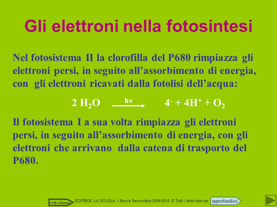 Gli elettroni nella fotosintesi