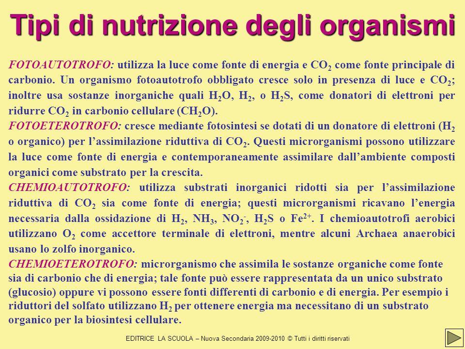 Tipi di nutrizione degli organismi