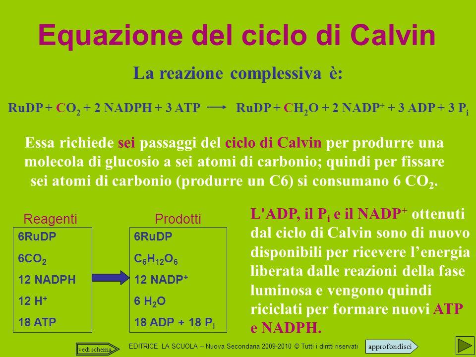 Equazione del ciclo di Calvin