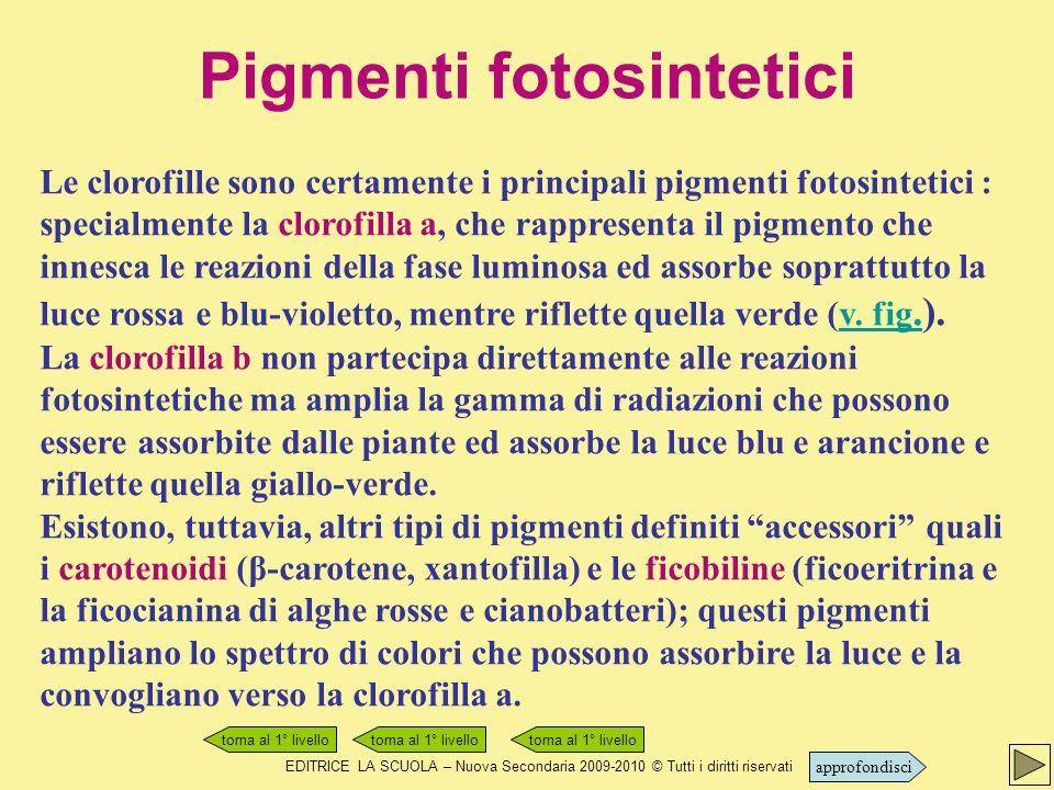 Pigmenti fotosintetici