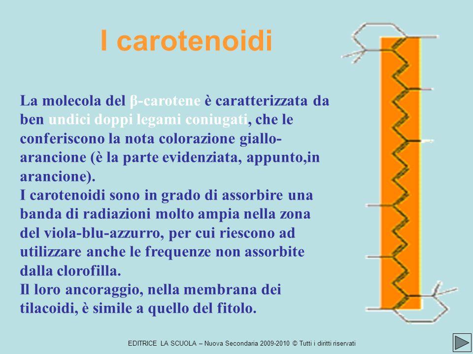 I carotenoidi