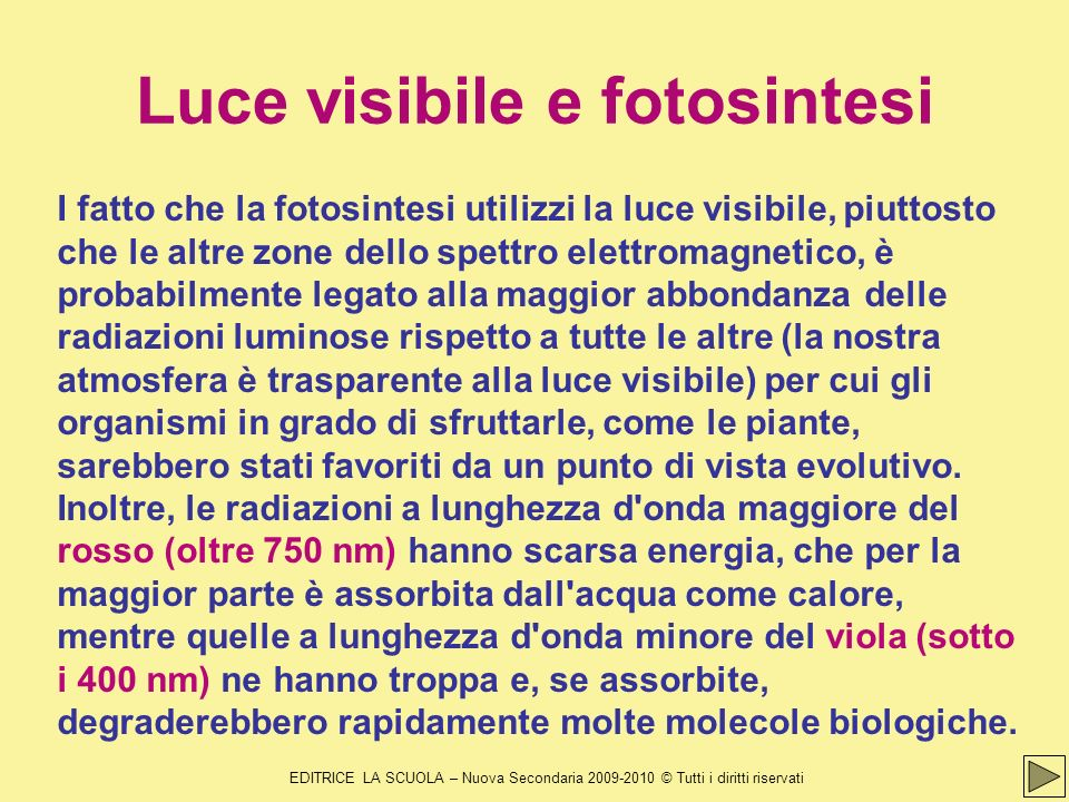 Luce visibile e fotosintesi