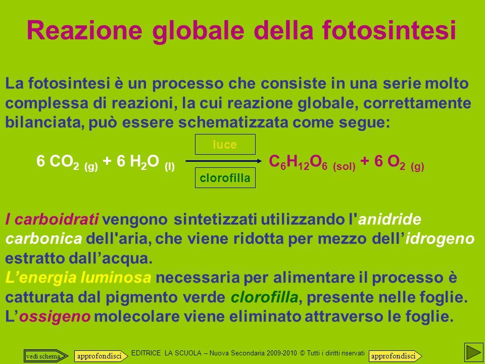 Reazione globale della fotosintesi