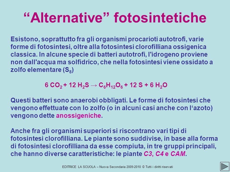 Alternative fotosintetiche