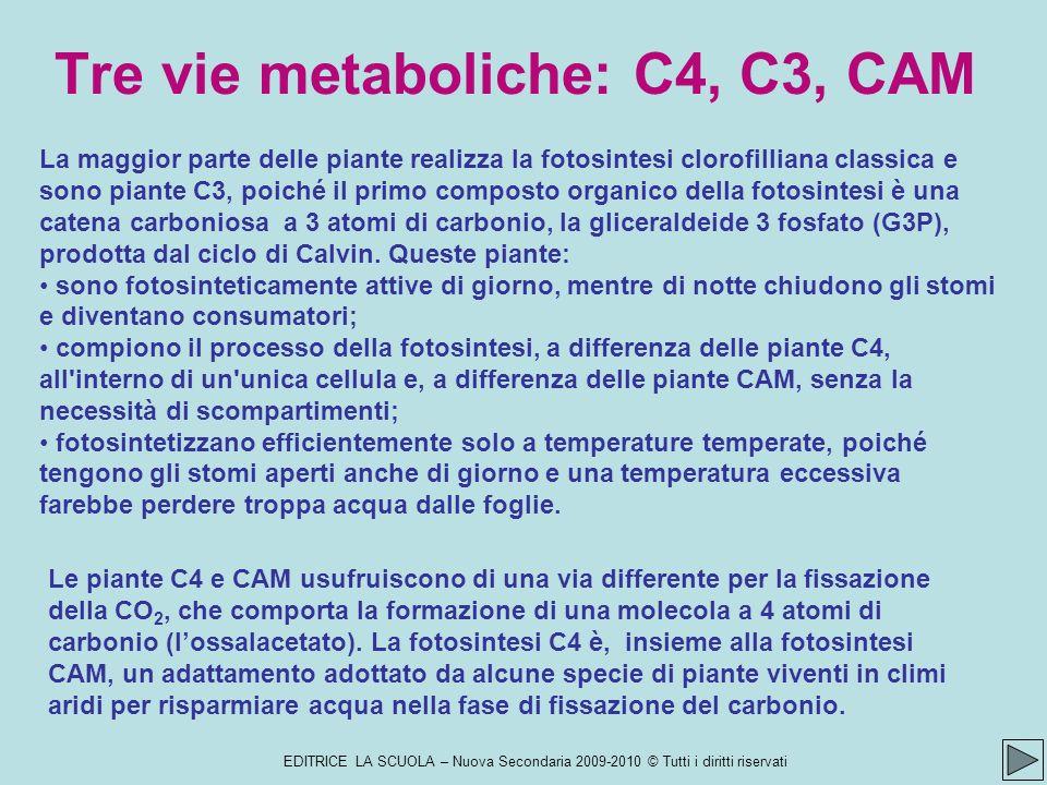Tre vie metaboliche: C4, C3, CAM