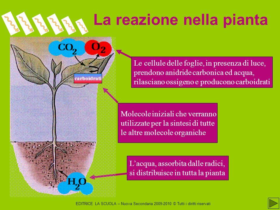 La reazione nella pianta