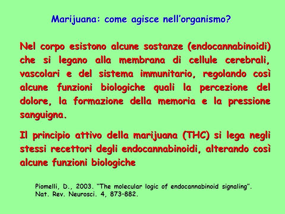 Marijuana: come agisce nell'organismo