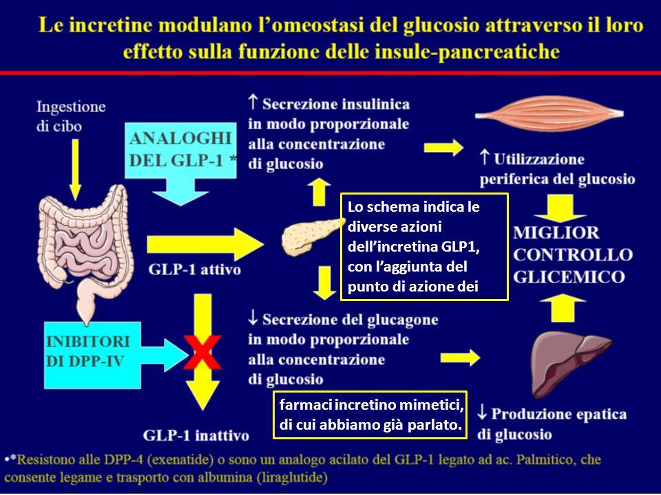 Lo schema indica le diverse azioni dell'incretina GLP1, con l'aggiunta del punto di azione dei