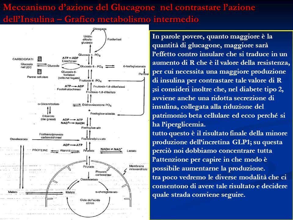 Meccanismo d'azione del Glucagone nel contrastare l'azione dell'Insulina – Grafico metabolismo intermedio