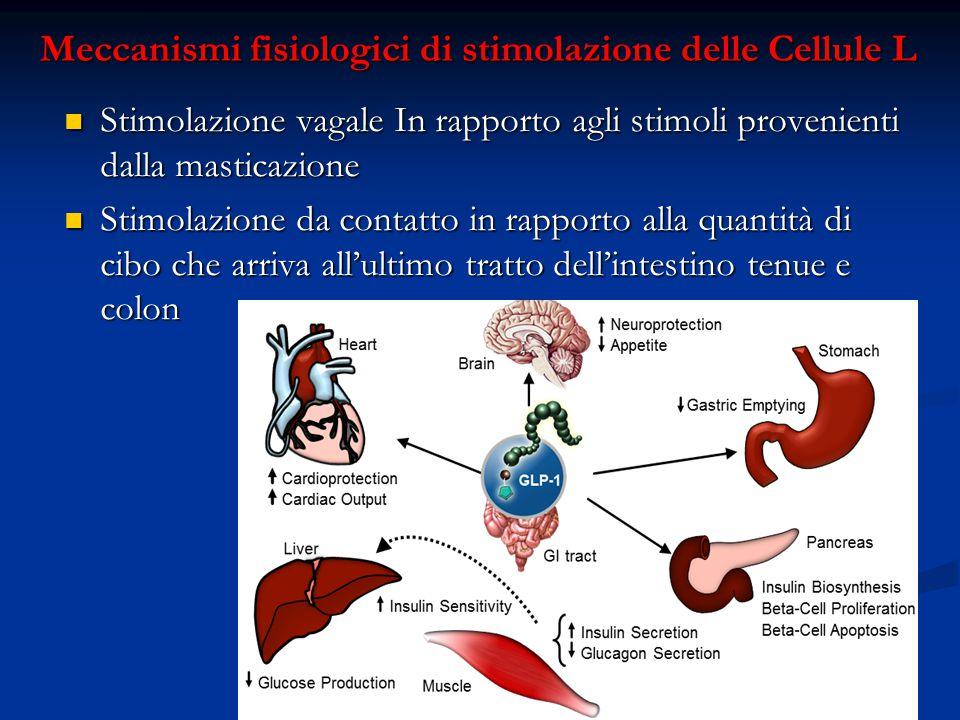 Meccanismi fisiologici di stimolazione delle Cellule L