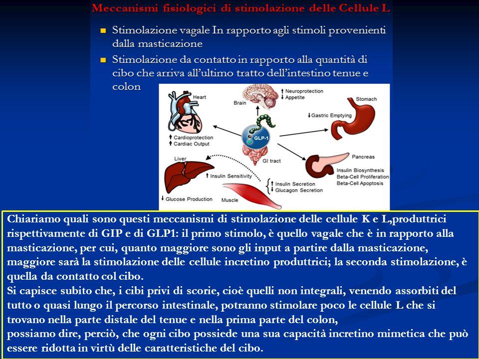 Chiariamo quali sono questi meccanismi di stimolazione delle cellule K e L,produttrici rispettivamente di GIP e di GLP1: il primo stimolo, è quello vagale che è in rapporto alla masticazione, per cui, quanto maggiore sono gli input a partire dalla masticazione, maggiore sarà la stimolazione delle cellule incretino produttrici; la seconda stimolazione, è quella da contatto col cibo.