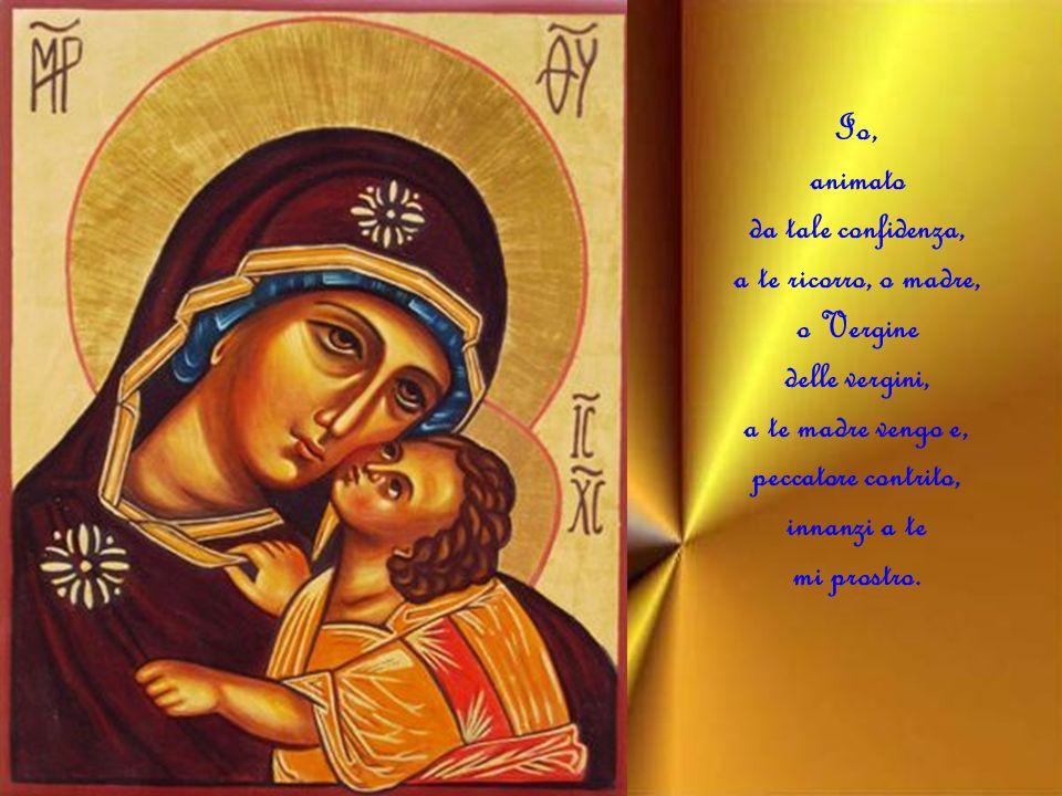 Io, animato da tale confidenza, a te ricorro, o madre, o Vergine delle vergini, a te madre vengo e, peccatore contrito, innanzi a te mi prostro.