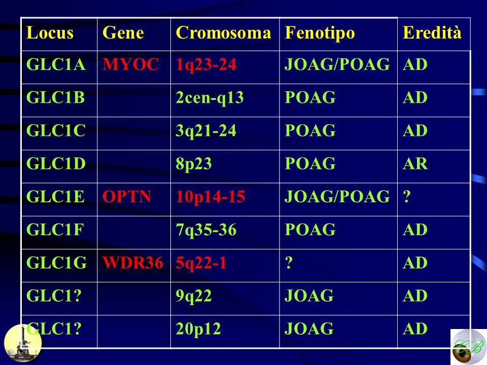 Locus Gene Cromosoma Fenotipo Eredità GLC1A MYOC 1q23-24 JOAG/POAG AD
