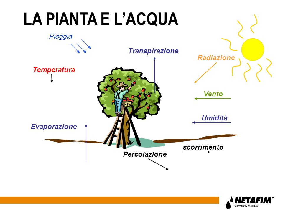 LA PIANTA E L'ACQUA Pioggia Transpirazione Radiazione Temperatura