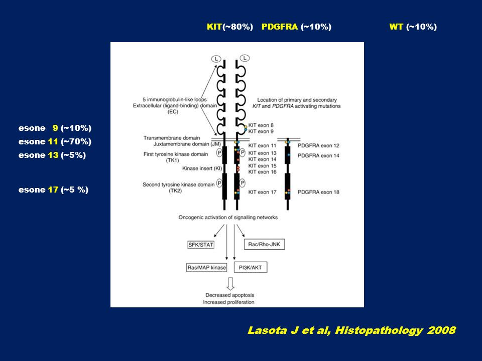 Lasota J et al, Histopathology 2008
