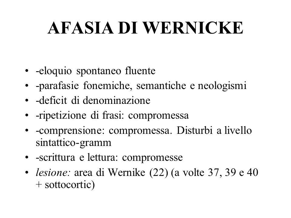 AFASIA DI WERNICKE -eloquio spontaneo fluente