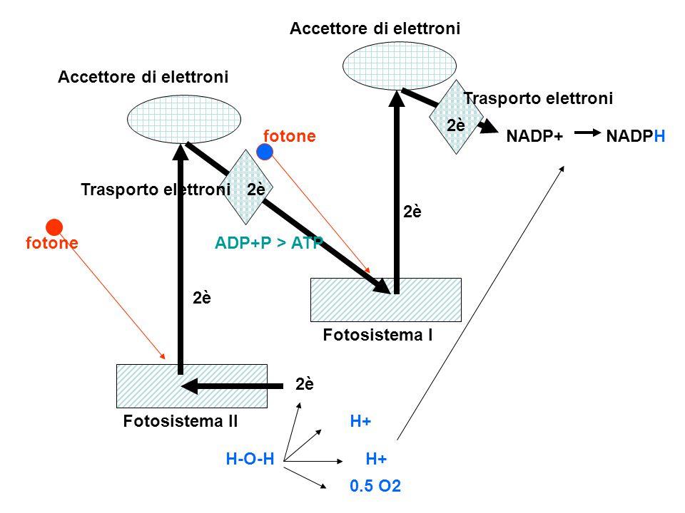 Accettore di elettroni
