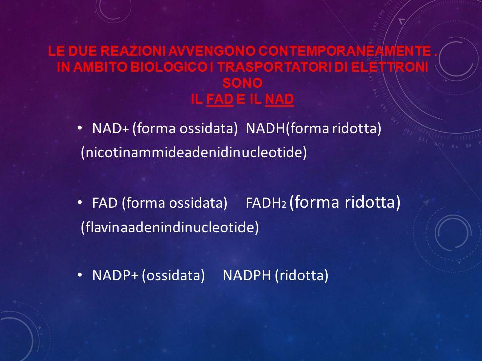 NAD+ (forma ossidata) NADH(forma ridotta)