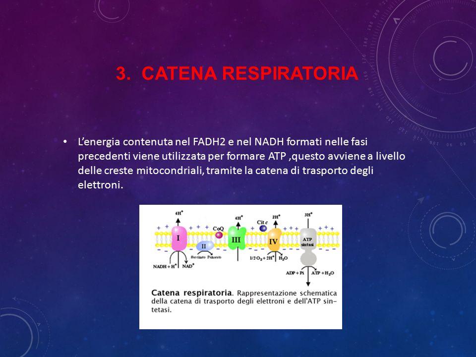 3. Catena respiratoria