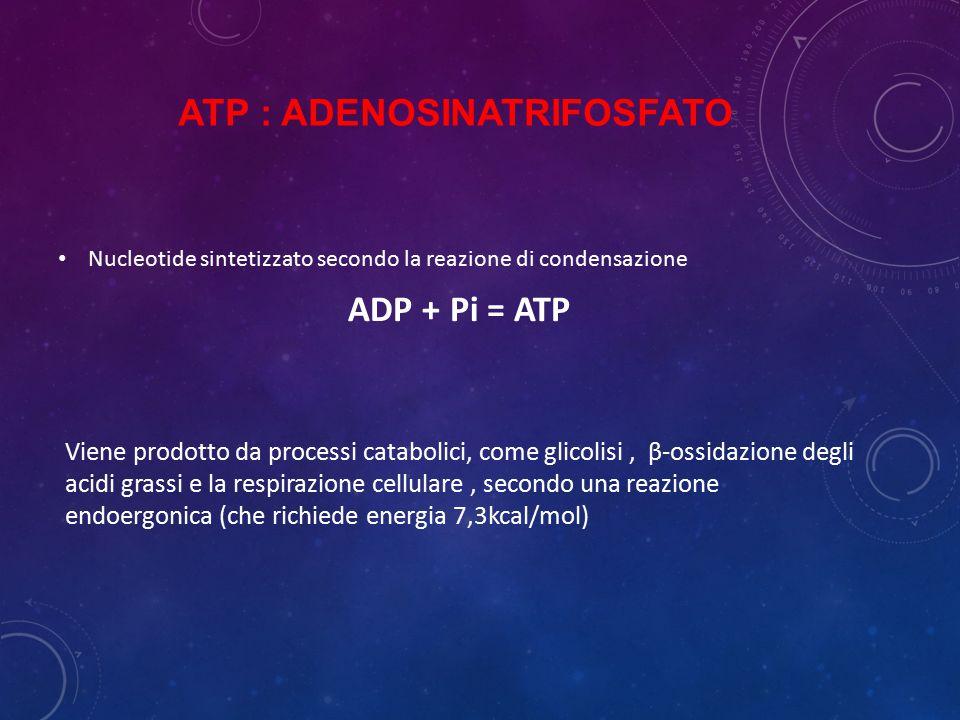 ATP : Adenosinatrifosfato