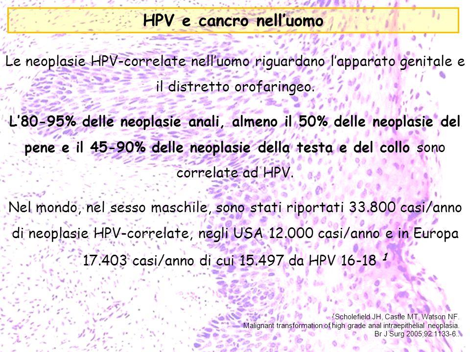 HPV e cancro nell'uomo Le neoplasie HPV-correlate nell'uomo riguardano l'apparato genitale e il distretto orofaringeo.
